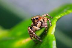 Aranha na natureza fotografia de stock