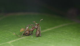 Aranha na natureza Foto de Stock Royalty Free