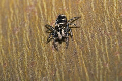 Aranha na parede Fotos de Stock