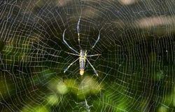 Aranha na rede Imagens de Stock