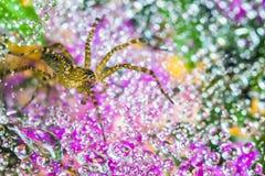 Aranha na teia de aranha Imagens de Stock