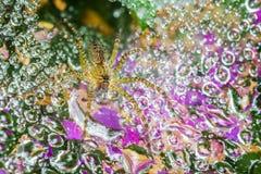 Aranha na teia de aranha Fotos de Stock Royalty Free