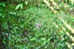 Aranha na Web Imagem de Stock