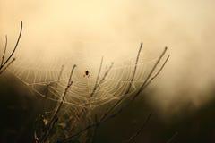 Aranha na Web Imagem de Stock Royalty Free