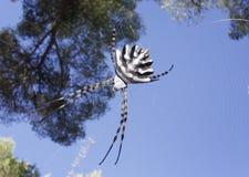 Aranha na Web Foto de Stock