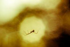 Aranha na Web imagens de stock