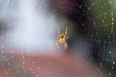 Aranha na Web fotografia de stock