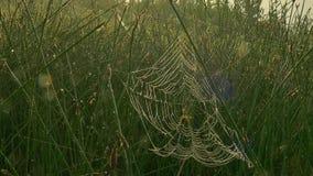 Aranha na Web filme