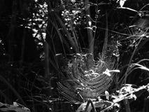 Aranha na Web - foto preto e branco imagens de stock royalty free