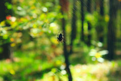 Aranha na Web na floresta verde foto de stock