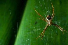Caçador do inseto Foto de Stock Royalty Free