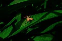 Aranha nas sombras Imagem de Stock