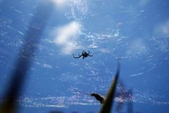 Aranha no azul fotografia de stock royalty free