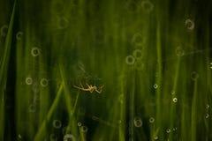 Aranha no campo de almofada Foto de Stock