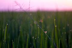 Aranha no campo de almofada Imagens de Stock Royalty Free