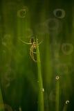 Aranha no campo de almofada Fotos de Stock Royalty Free