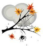 Aranha no cobweb na queda Fotografia de Stock Royalty Free