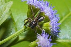 Aranha no fim da flor acima Fotos de Stock Royalty Free