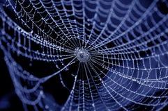 Aranha no Web Fotografia de Stock Royalty Free