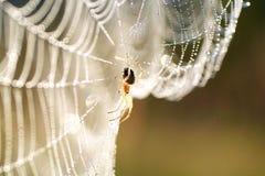 aranha no Web Fotografia de Stock