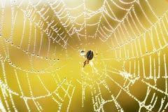 Aranha no Web Imagem de Stock Royalty Free