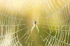 Aranha no Web Imagens de Stock