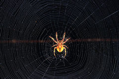 Aranha no Web Foto de Stock Royalty Free