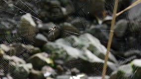 Aranha no Web video estoque