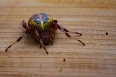 Aranha no woodgrain Imagens de Stock Royalty Free