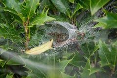 A aranha pacientemente Fotografia de Stock Royalty Free