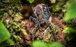 Aranha preta na árvore natural imagens de stock