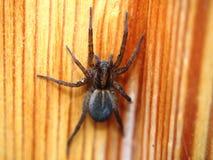 A aranha preta senta-se em uma superfície de madeira artrópode imagens de stock