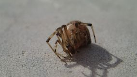 Aranha que espera e que sae do quadro video estoque