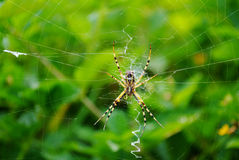 Aranha que espera em sua Web Imagens de Stock