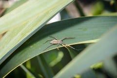 Aranha que espera em uma licença imagem de stock