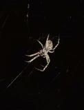 Aranha que faz sua teia de aranha Fotografia de Stock Royalty Free