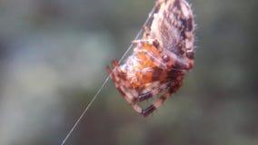 Aranha que vive nas madeiras foto de stock