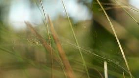 Aranha selvagem na floresta ensolarada filme