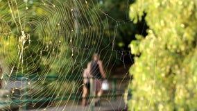 A aranha teceu uma Web video estoque