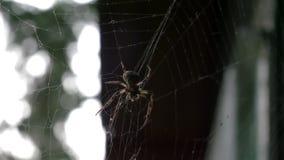 Aranha, teia de aranha, 4K, 25fps, 10bit filme