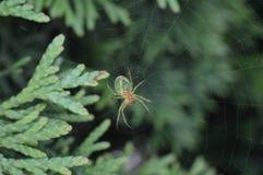 Aranha verde Imagens de Stock Royalty Free