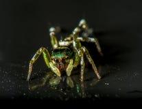 Aranha verde Fotos de Stock