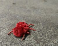 Aranha vermelha fotografia de stock