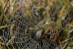 Aranha-Web imagem de stock