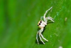Aranhas Imagem de Stock