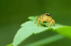 aranhas Imagens de Stock
