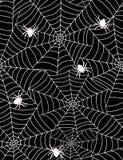 Aranhas no Web Fotos de Stock Royalty Free