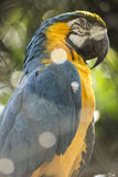 Arara Azul. Arara in São Paulo Zoo, Brazil royalty free stock photos