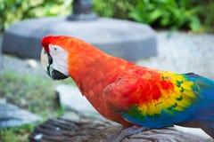 Arara bonita e pássaros bonitos Fotografia de Stock Royalty Free