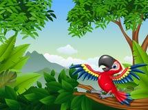 Arara dos desenhos animados na selva ilustração stock